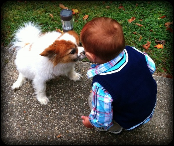 Kissing Dogs and Finding Rocks - things that little boys do!