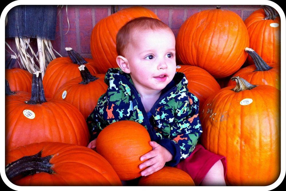 Daniel vs the Pumpkin Patch