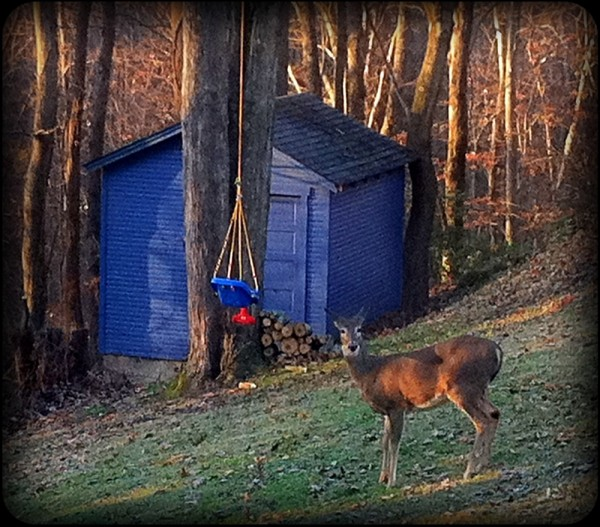 Daniel sees a deer in the backyard this morning.