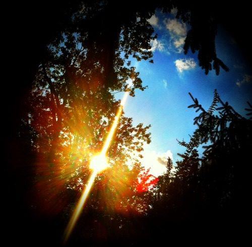 Beautiful evening tonight. Sun shining in our backyard.