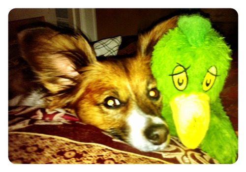 C.K. (Chicken Killer) and Green Chicken
