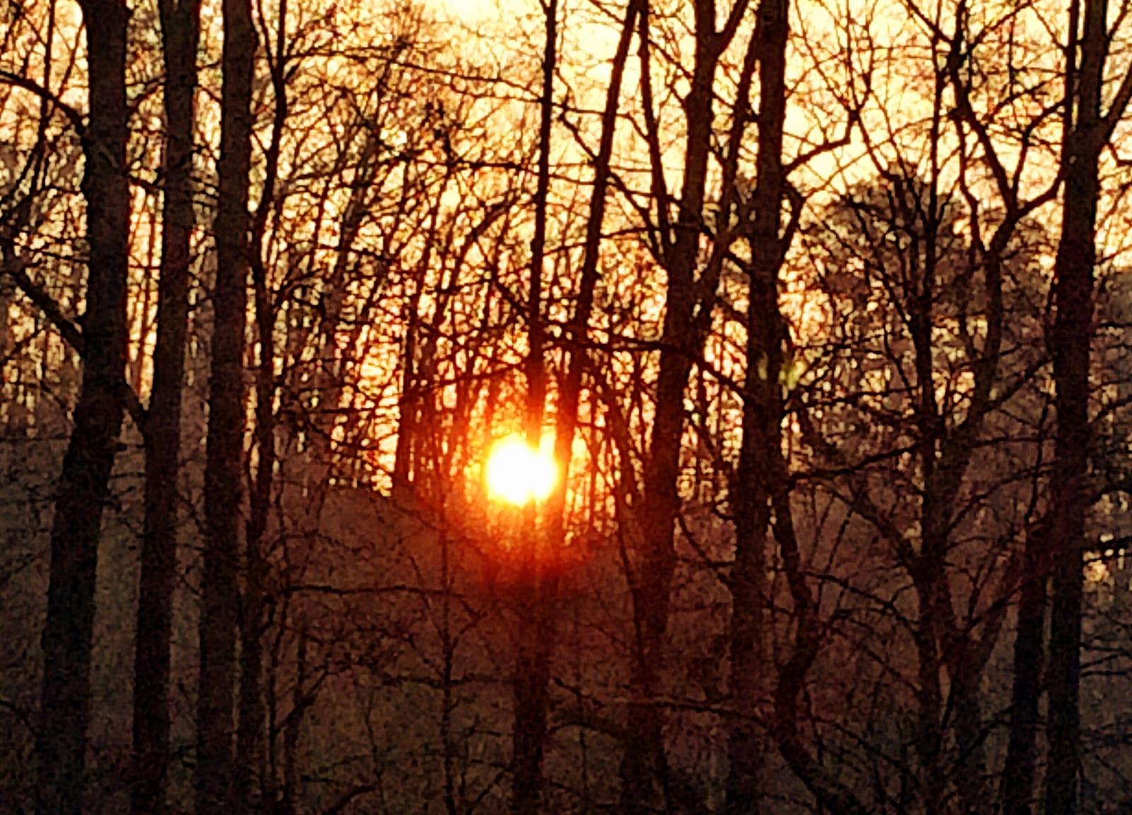 Backyard sunrise this morning.