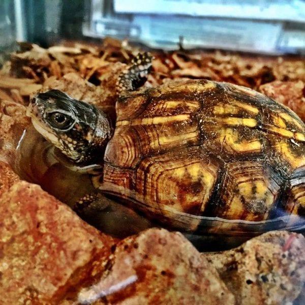 Bathtime for Turtle…