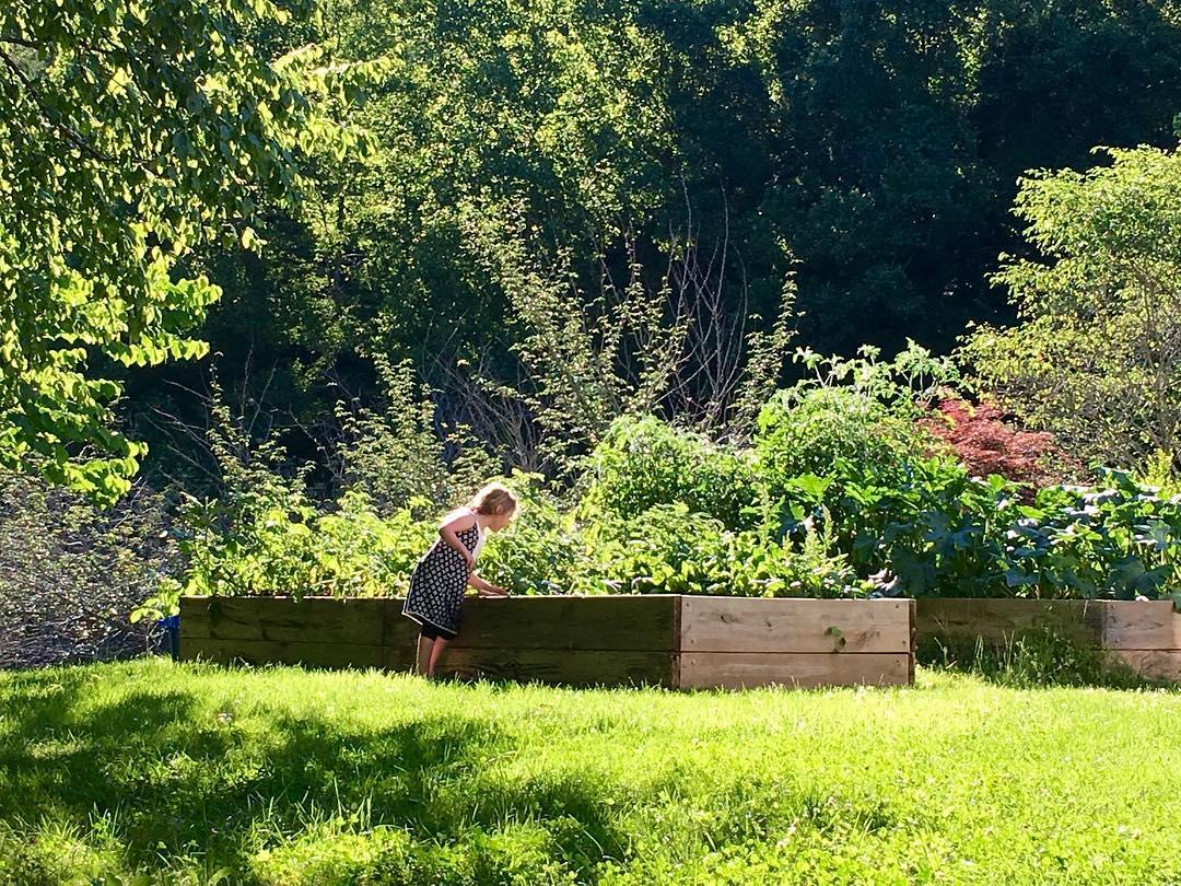 Lily checking in on Kristen's garden